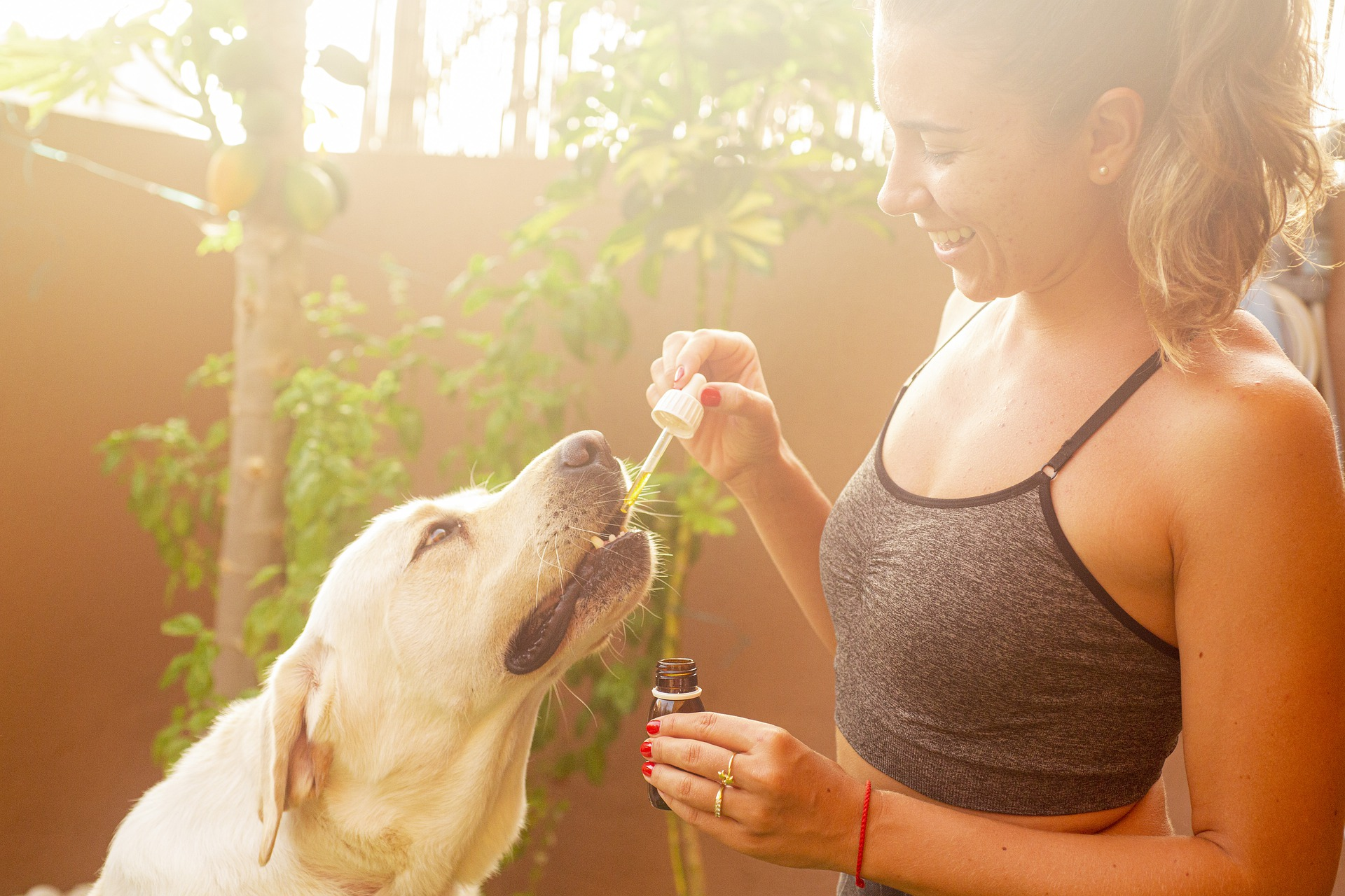 cbd-oil-for-dogs-get-from-woman